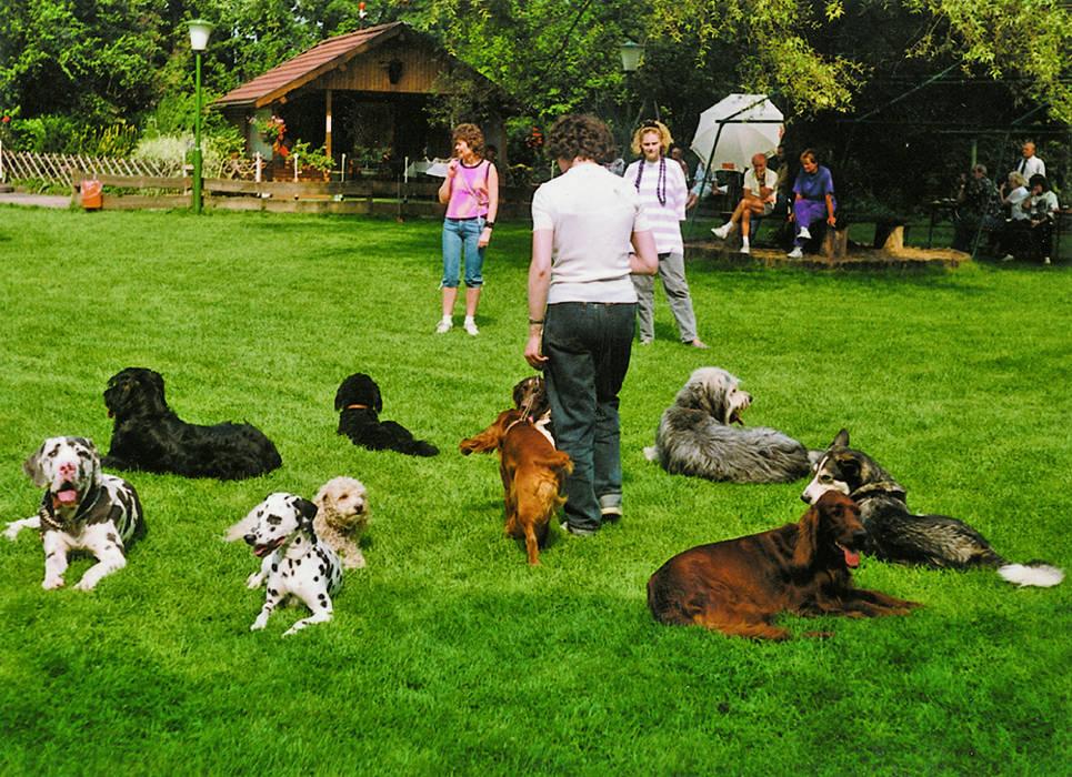 17 zuckersüße Bilder von Hunden und Babys, die sich kennenlernen.